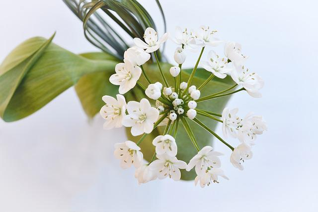 Flower, Flowers, White, Leek Flower, From Above