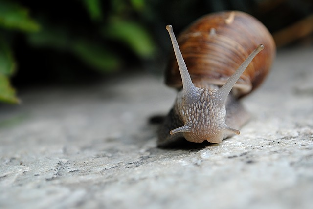 Snail, Nature, Slow, From The Front