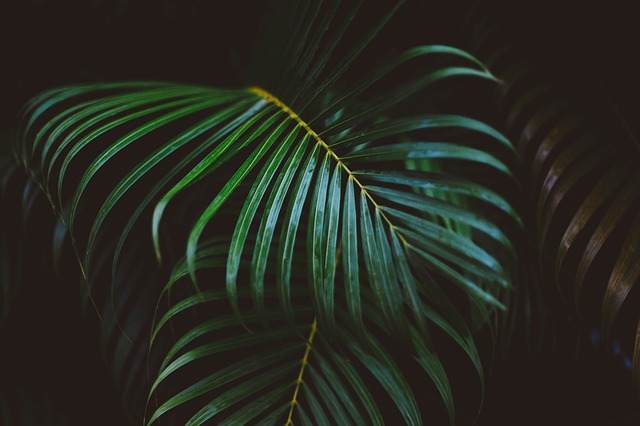 Frond, Green, Leaves, Nature, Plant, Fern