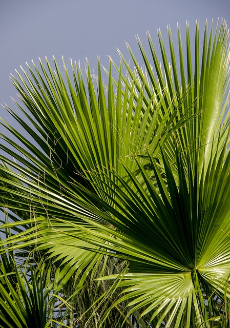 Fronds, Palm, Leaf, Green, Foliage, Pattern, Tropical
