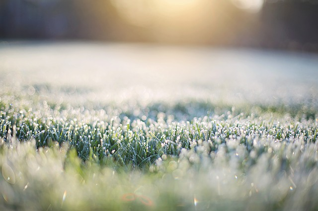 Frost On Grass, Early Morning, Frost, Morning