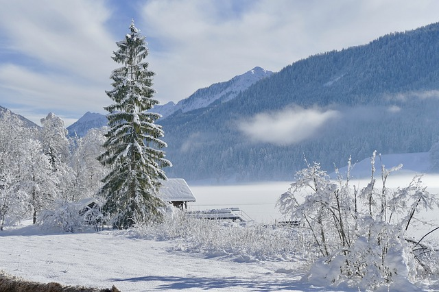 Snow, Winter, Cold, Frost, Frozen, Tree, Landscape