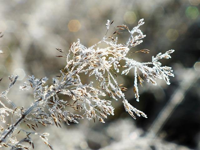 Winter, Snow, Frost, Nature, Frozen, Ice