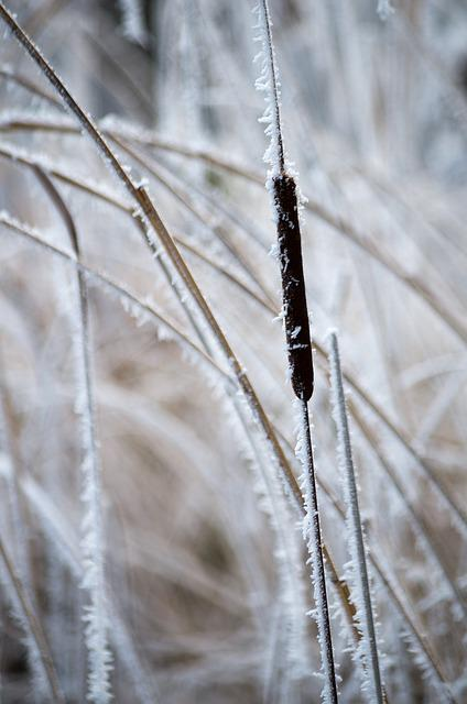 Nature, Frost, Close, Winter, Frozen, Waters, Ice