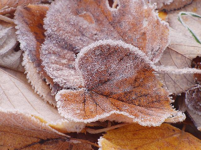Lipovina, Frozen, Winter, Frost, Iced
