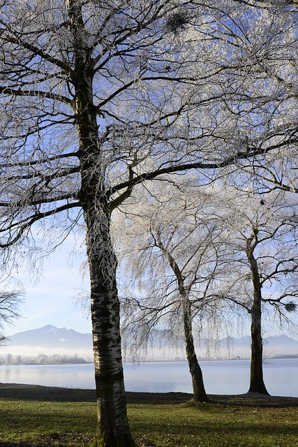 Hoarfrost, Cold, Frost, Winter Time, Trees, Birch, Lake