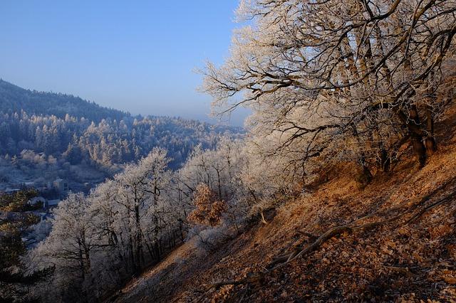 Frost, Nature, Landscape, Morning, Winter