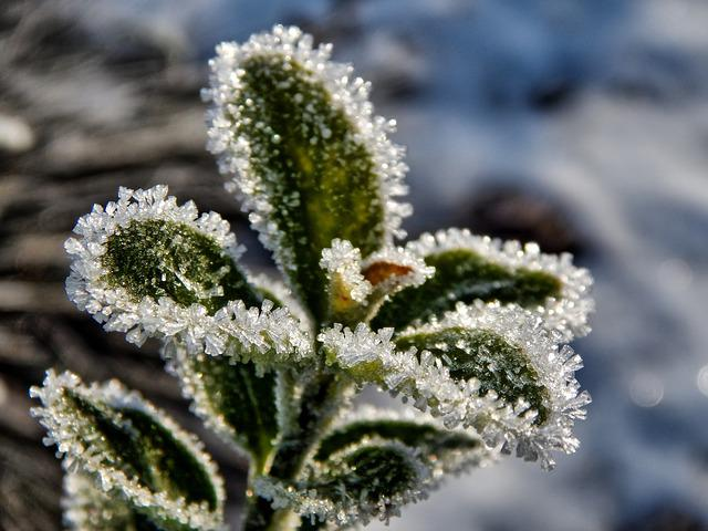 Winter, Nature, Snow, Plant, Macro, Frost, Ice
