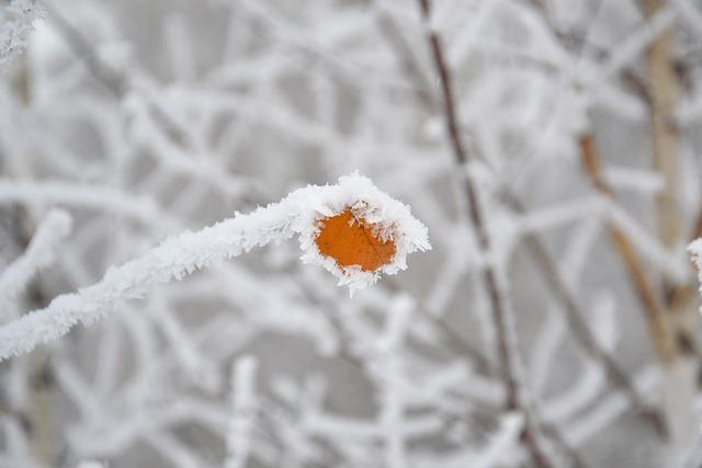 Winter, Frost, Trees, Leann, Branch, Sheet, Rime