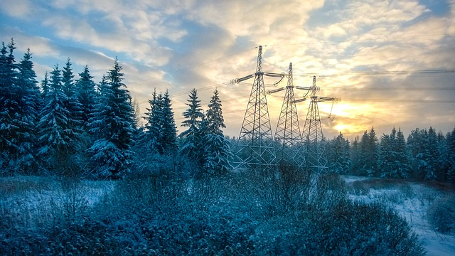 Pillars, Forest, Winter, Frost, Wire, Trees, Cold