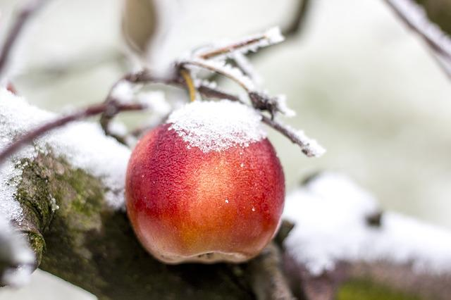 Apple, Winter, Snow, Frost, Ice, Icing, Fruit, Rime