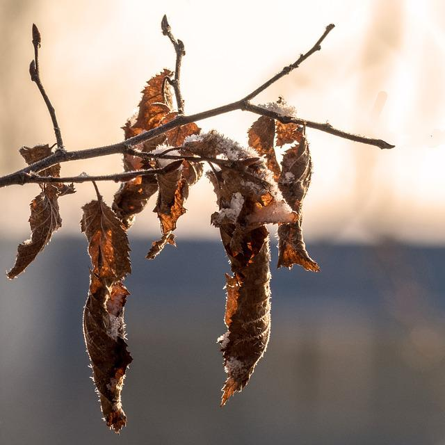 Nature, Winter, Frost, Time Of Year, Foliage Branch