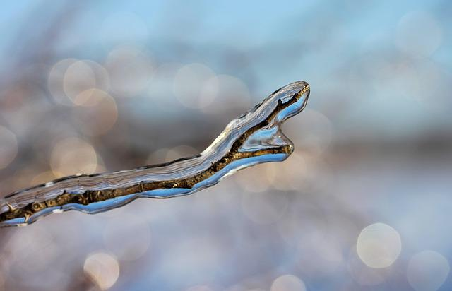 Frosty Branches, Bough, Ice, Winter, Glamour, Nature