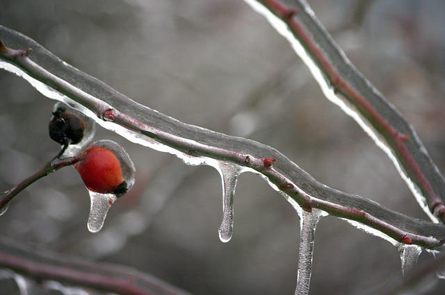 Frozen Branch, Winter, Ice, Icing, Landscape, Frost