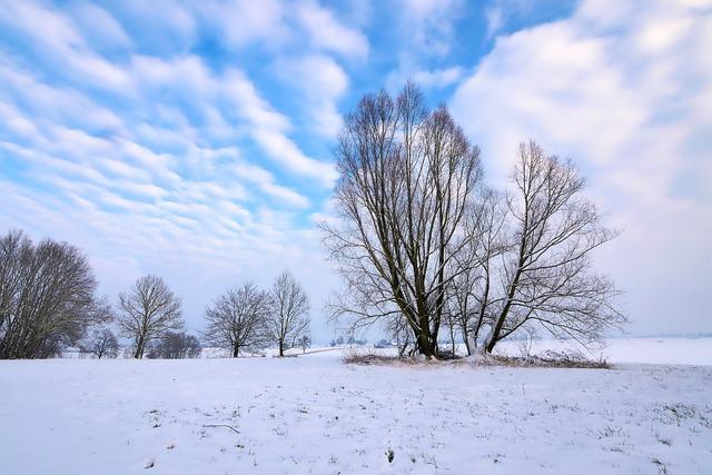 Winter, Snow, Frost, Cold, Frozen, Tree, Landscape