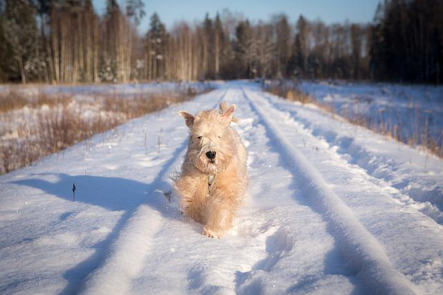 Snow, Winter, Cold, Frost, Frozen, Running, Dog, Animal