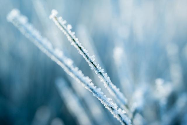 Ice, Eiskristalle, Frost, Winter, Broom, Branch, Frozen