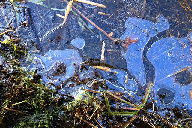 Ice, Frozen, Freezing, Surface, Frozen Marsh