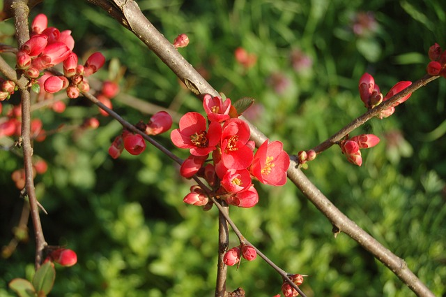 Fruit, Nature, Tree, Branch