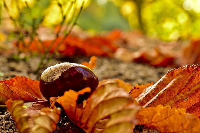Chestnut, Fruit, Autumn, Autumn Fruit, Buckeye