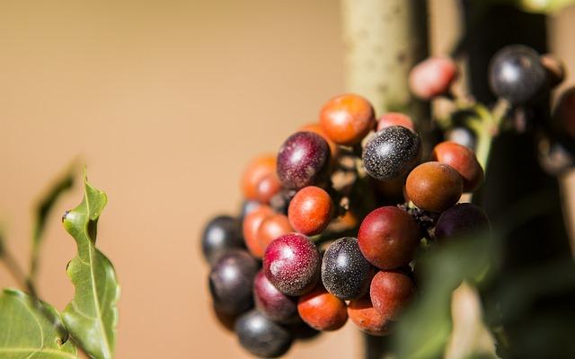 Fruit, Cerrado, Fruit Of The Cerrado, Brazilian Cerrado
