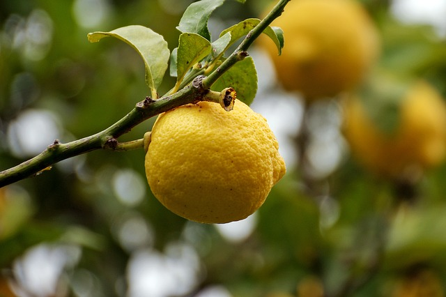 Citrus, Limon, Yellow, Citrus Fruits, Plant, Fruit