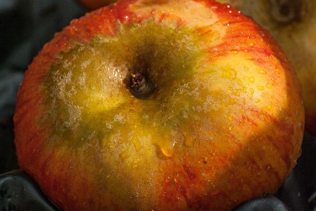 Fruit, Apple, Fall