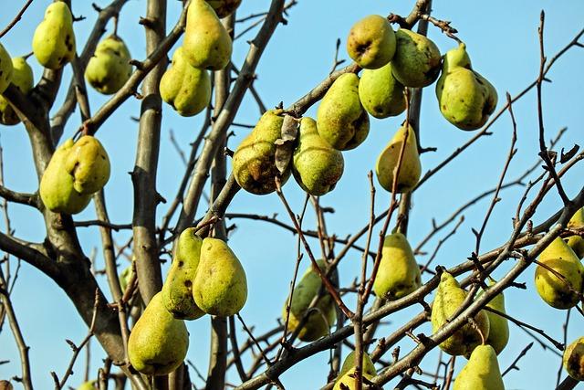 Pears, Fruit, Fruits, Ripe, Vitamins, Healthy, Food