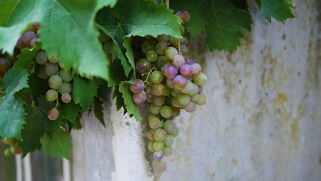 Vine, Grape, Wine, Winery, Fruit, Leaf, Vineyard