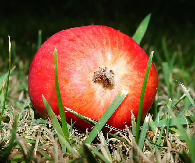 Apple, Sweet, Fruit, Delicious, Healthy, Food, Frisch