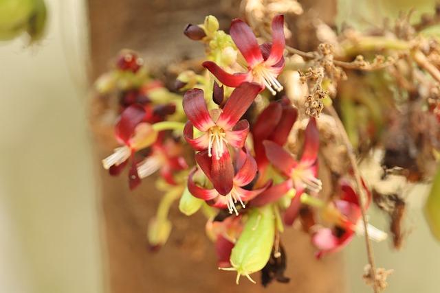 Bilimbi, Flower, Small Flower, Kerala, India, Fruit