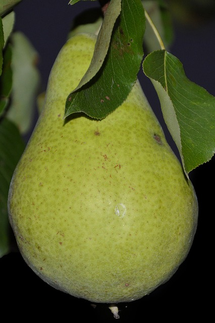 Pear, Leaves, Fruit, Ripe, Green