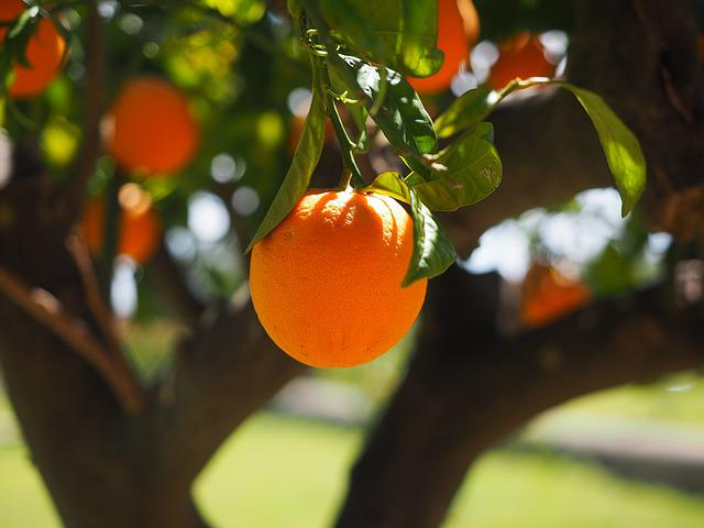 Orange, Log, Tribe, Orange Tree Trunk, Fruit