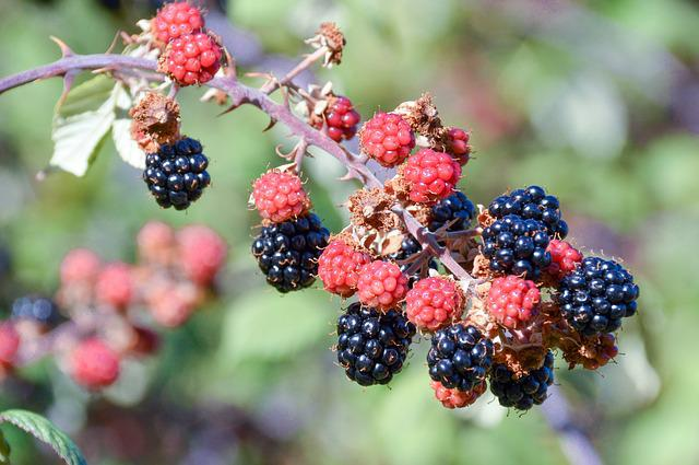 Fruit, Nature, Food, Leaf, Berry, Outdoors, Closeup