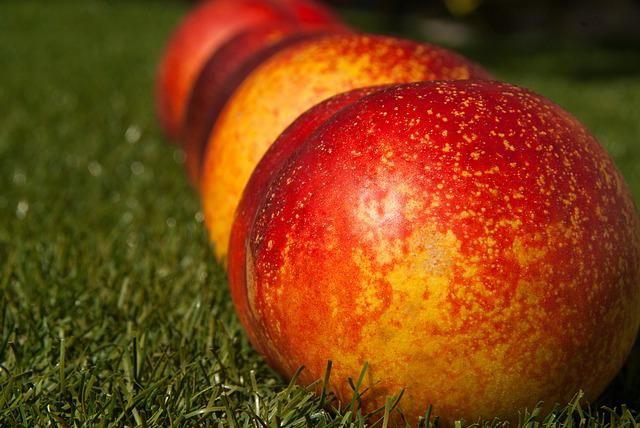 Fruit, Fishing, Peach Apricot, Garden, Harvest