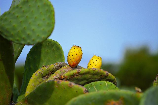Prickly Pears, Fruit, Prickly Pear, Cactus, Skewers