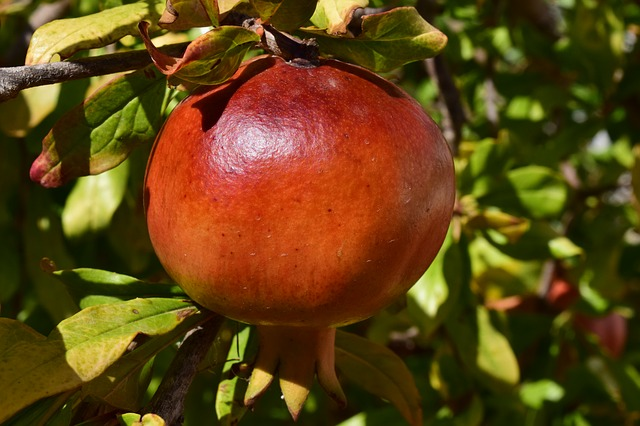 Pomegranate, Ripe, Fruit, Healthy, Food, Delicious
