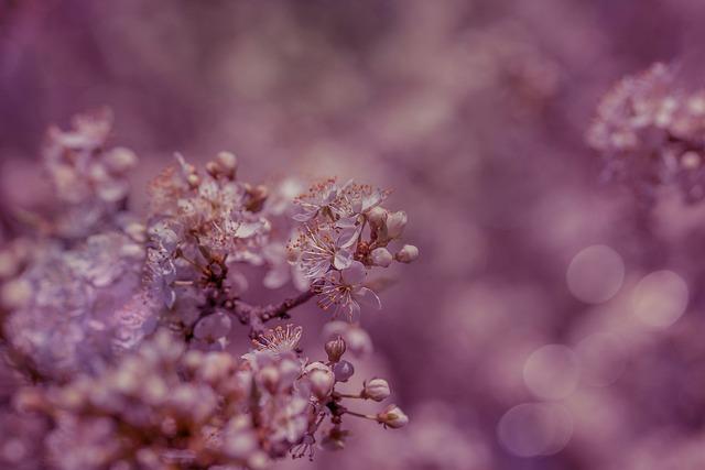 Flowers, Fruit Tree, Blood Plum, Spring, Nature, Tree