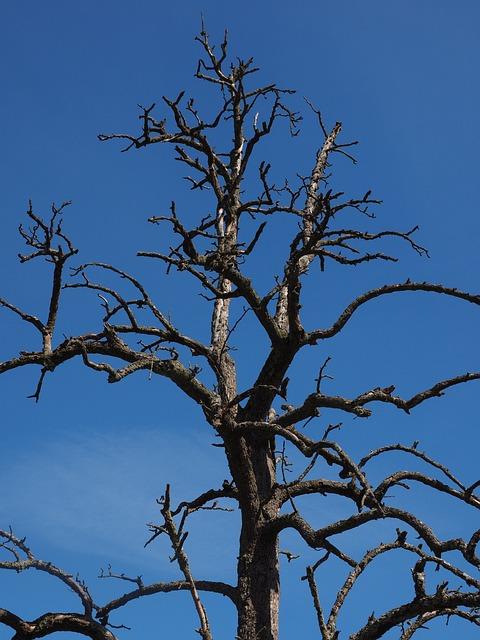 Tree, Dead Plant, Dead, Waldsterben, Pear, Fruit Tree