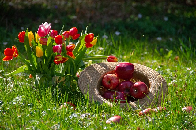 Apple, Fruit, Tulips, Flower, Red, Yellow, Orange