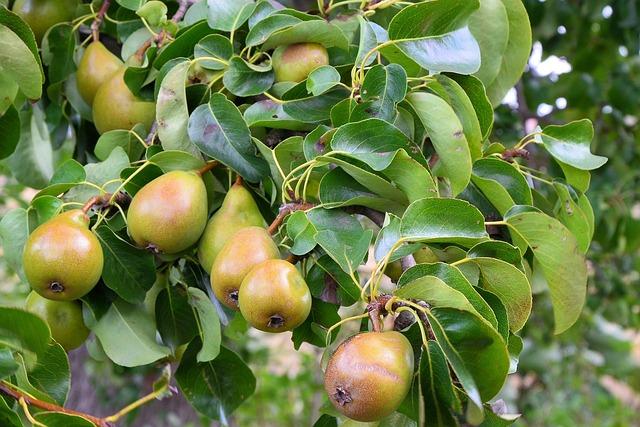 Pears, Pear, Fruit, Healthy, Vitamins, Eat