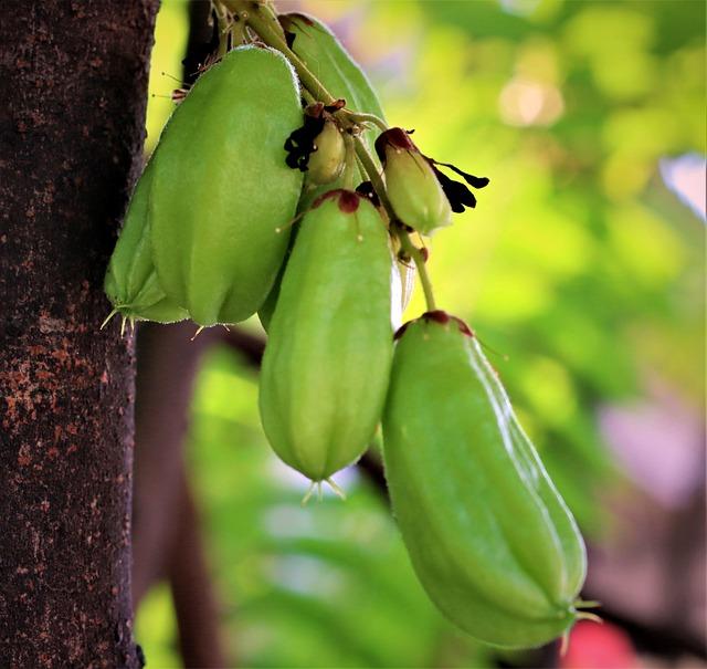 Bilimbi, Fruits, Food, Averrhoa Bilimbi, Green Fruits
