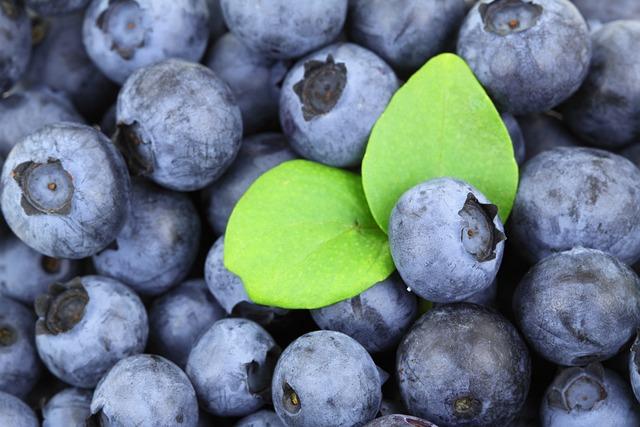 Berries, Blueberries, Fruits, Produce, Harvest, Organic