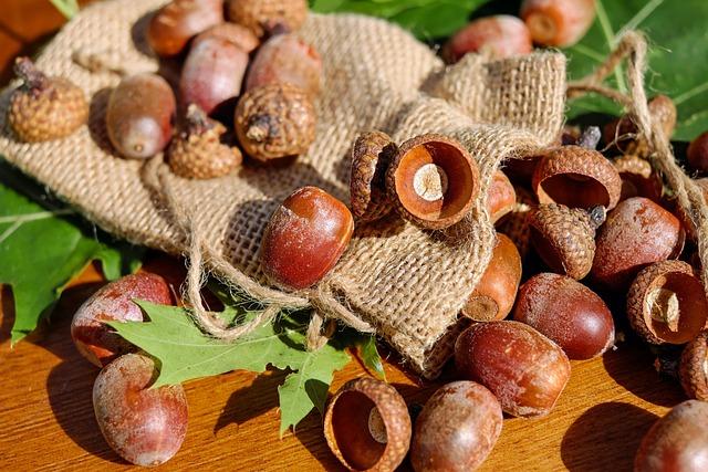 Acorns, Tree Fruit, Fruits, Shiny, Red-oak