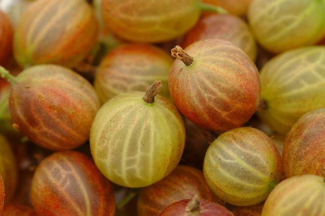 Gooseberry, Berries, Soft Fruit, Fruit, Fruits