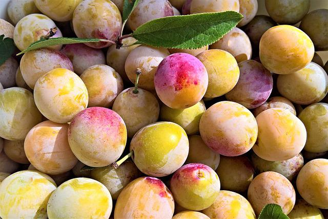 Yellow Plums, Fruits, Stone Fruit, Mirabelle Plum Tree