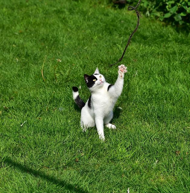 Cat, Play, Young Cat, Mieze, Domestic Cat, Grass, Fun