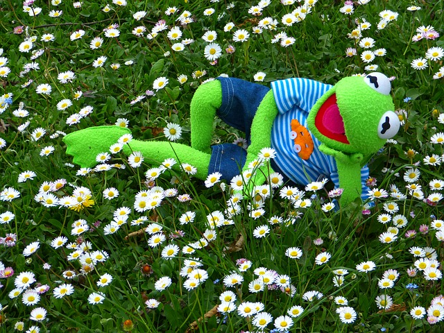 Kermit, Frog, Meadow, Daisy, Concerns, Relax, Rest, Fun