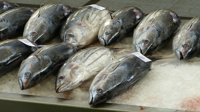 Fish Market, Fischtheka, Fish, Madeira, Funchal, Tuna