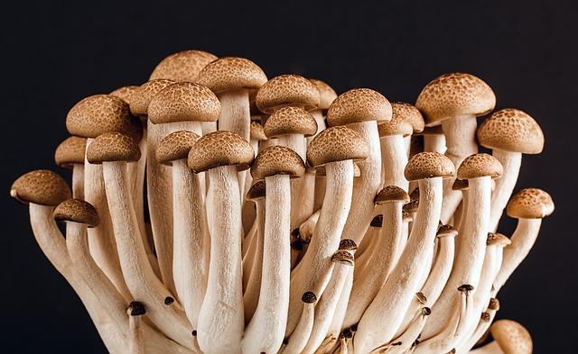 Mushroom, Fungi, Fungus, Many, Food, Vegetarian